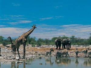 Waterhole Botswana